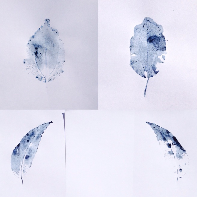 Australian camphor and gum leaves - indigo monoprints - Melinda Blair Paterson - 2015